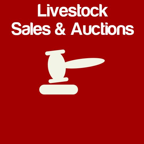 Livestock Sales & Auctions Icon
