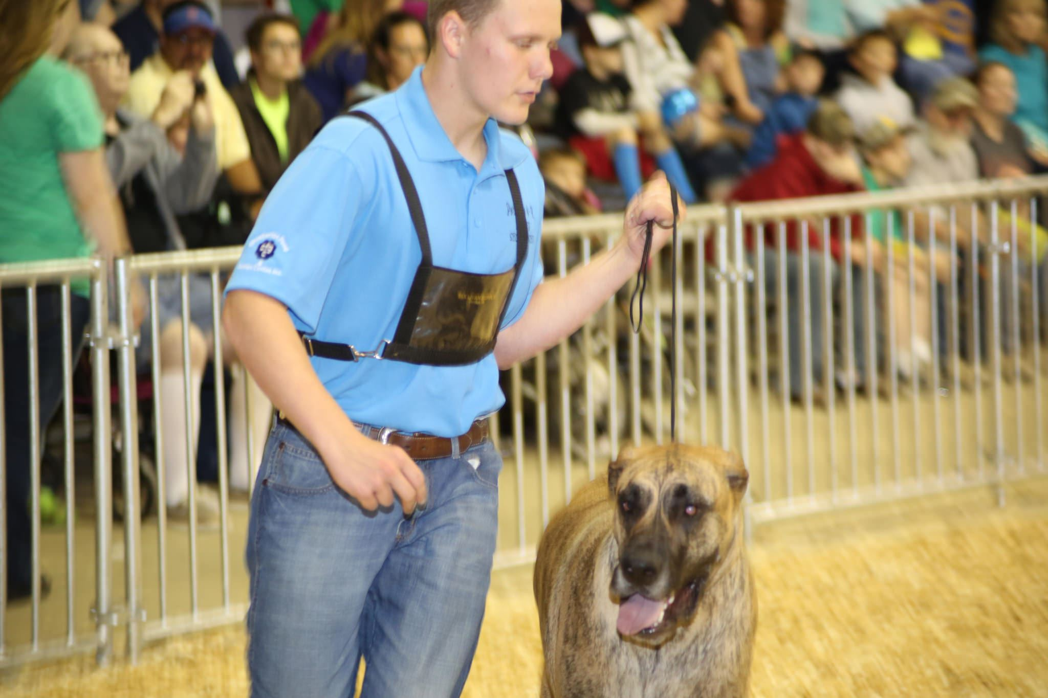 Dog handler with dog at dog show